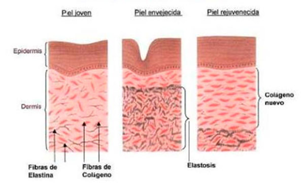 efecto fisiologico